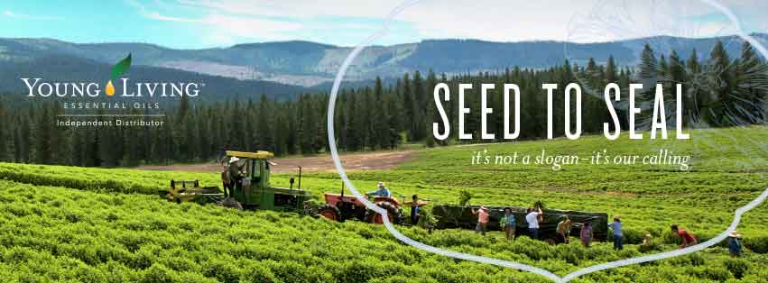 Fields - YL FB Cover
