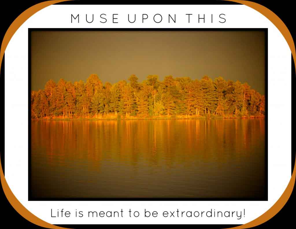 Musing: Life Coaching with MuseLaura